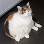 fat-cat