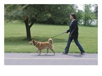 dog-walking