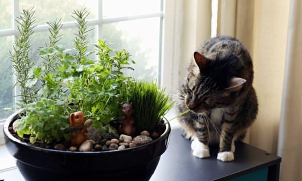 safe-plants-cats-cat-garden